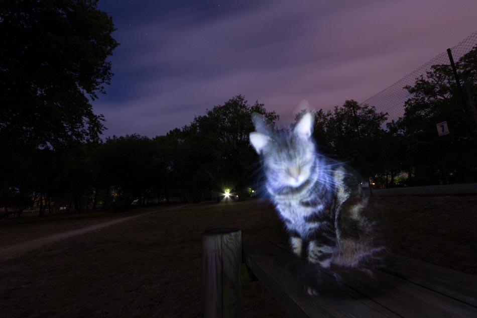 Un chat la nuit sur un banc