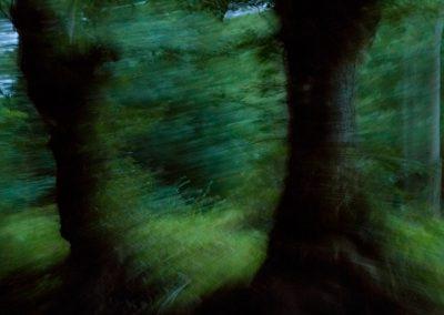 Le Marais - Arbres verts