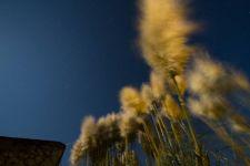 Les pluneaux nuit de pleine lune
